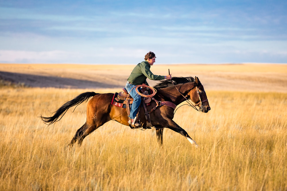 A young man rides his horse fast across the prairie grass south of Chester in Liberty County, Montana.→ License Photo