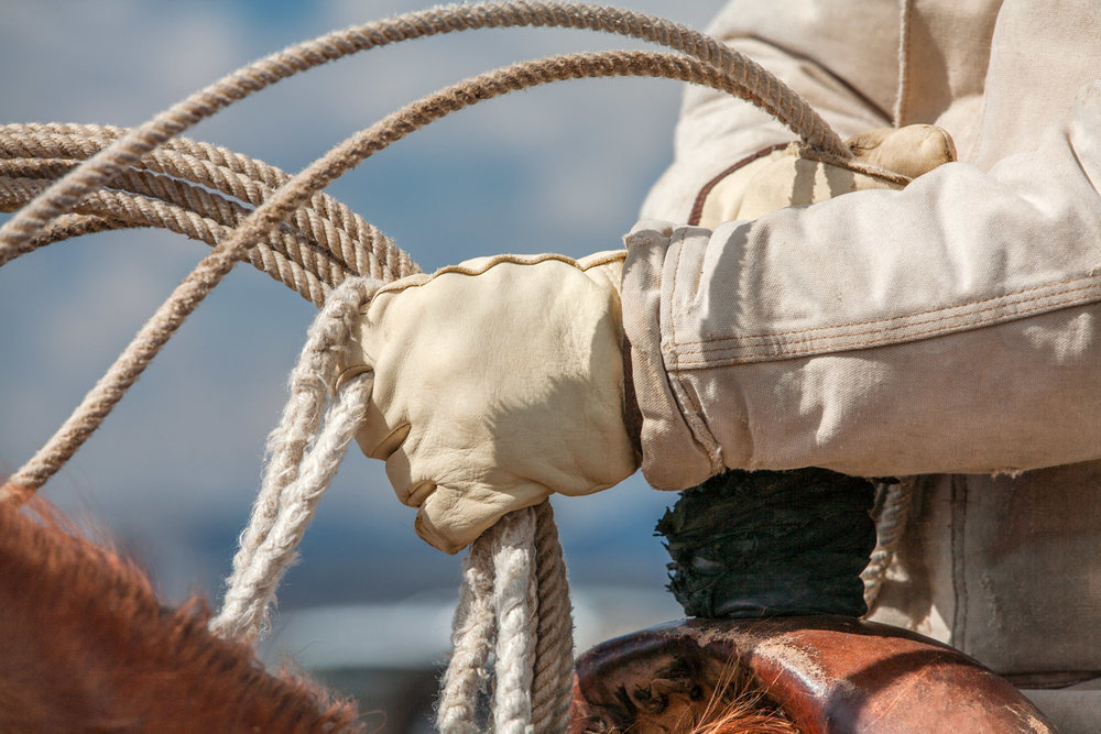 A close-up of a rancher's hands in leather gloves roping cattle on a ranch near Lloyd, Montana.  → License Photo