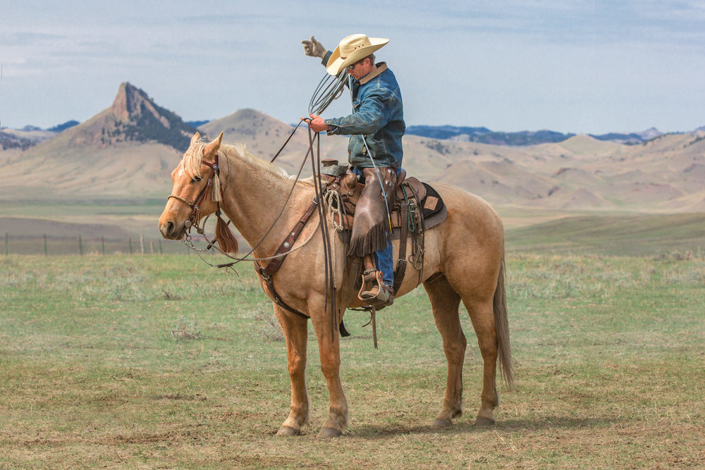 A cowboy arranging ropes and reins on a ranch near Cleveland, Montana.   → License Photo