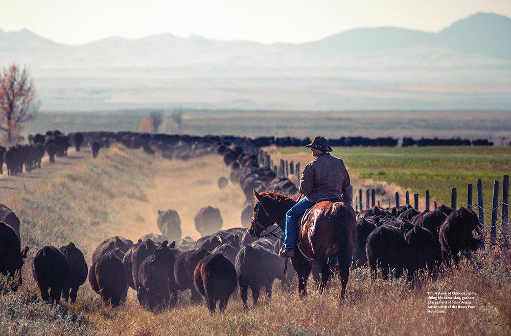 Montana-Magazine-Branding-Article-20180418-Small-3.jpg