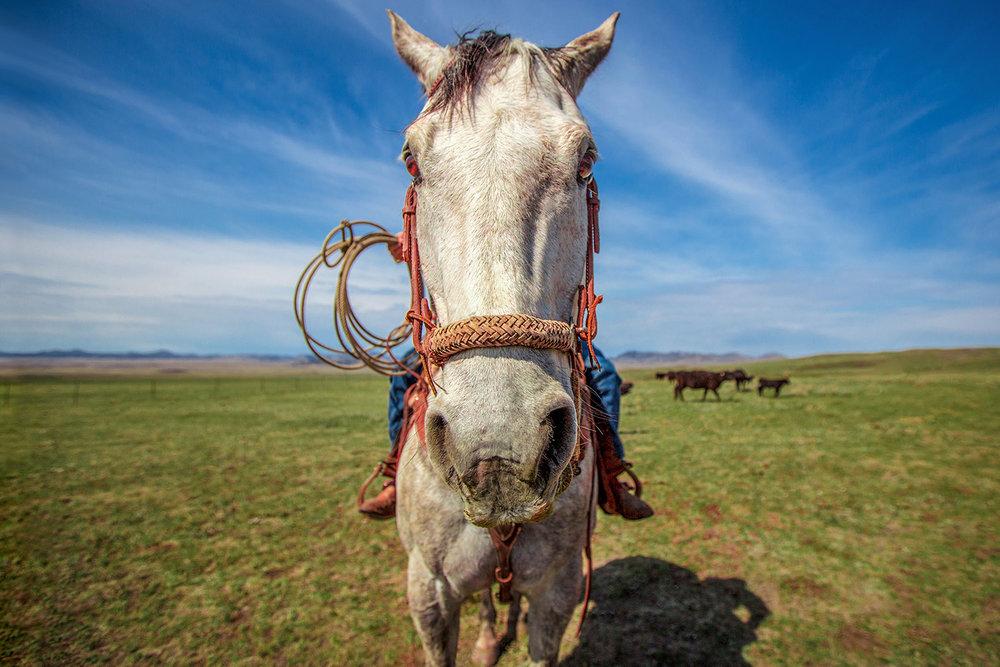 P6-Klassy-Horse-Head-1.jpg