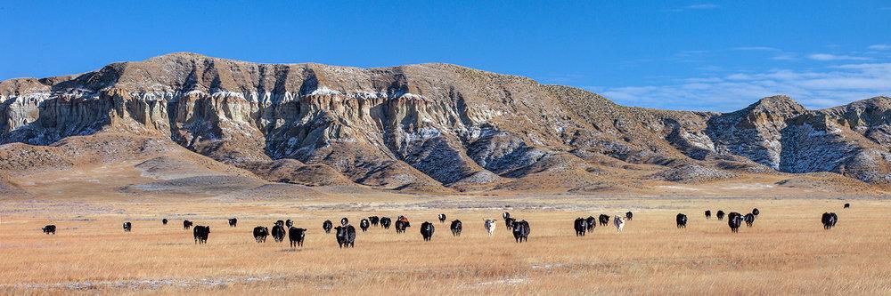 Chalk Cliffs Panorama