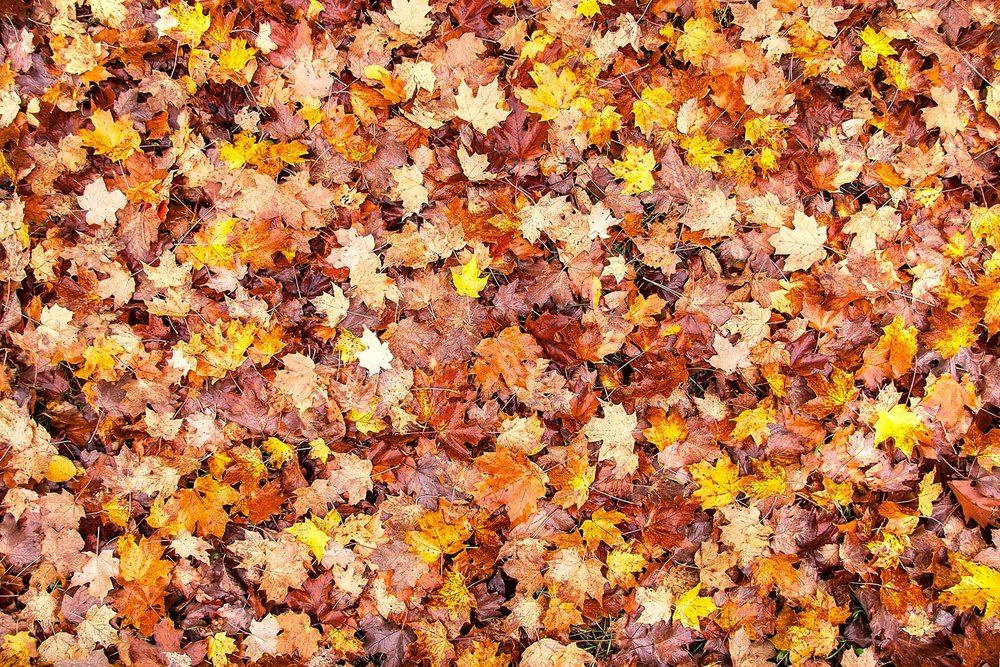 Bed of Autumn Leaves