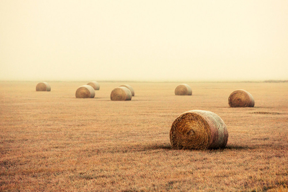 Bales in the Fog