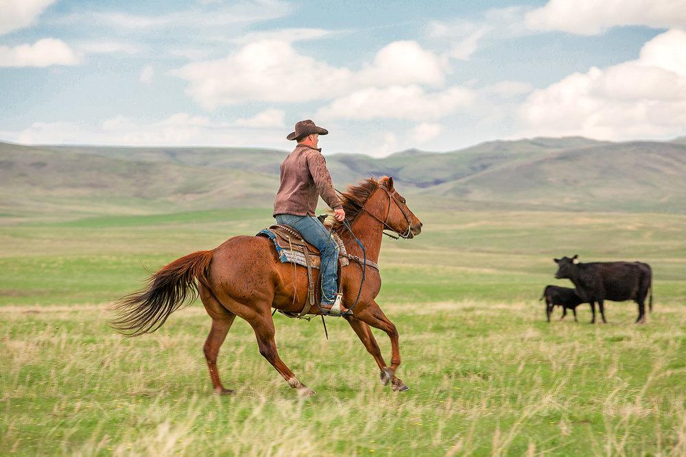 Cowboy Fast