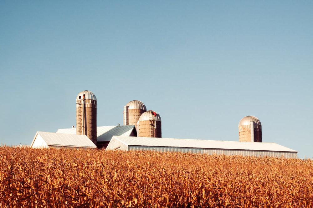 Corn Rise