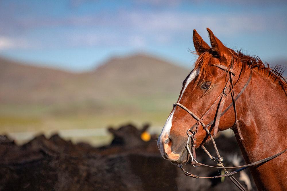 Horse Profile