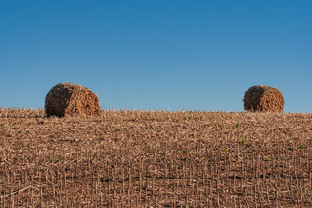 Corn Stalk Bales