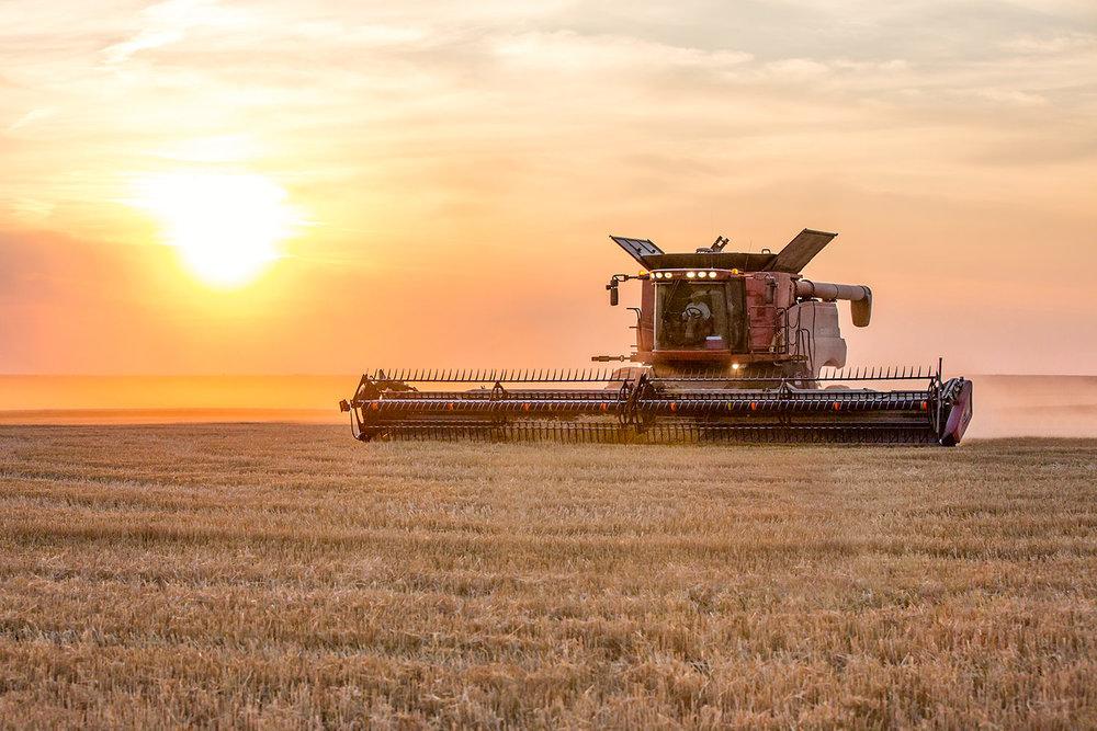 Warm Harvest Sun