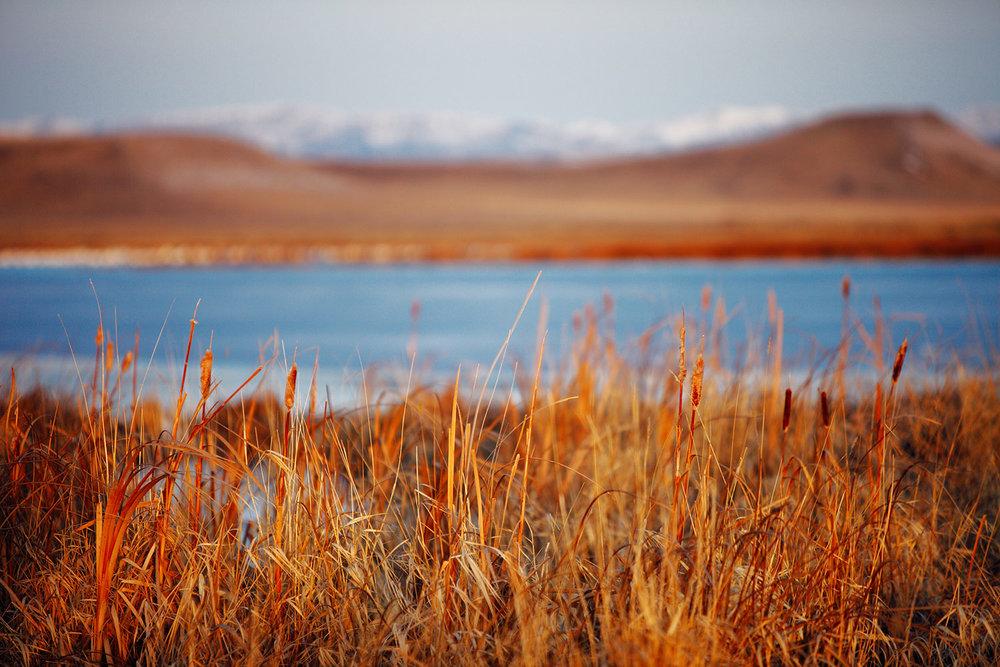 Freezeout Reeds