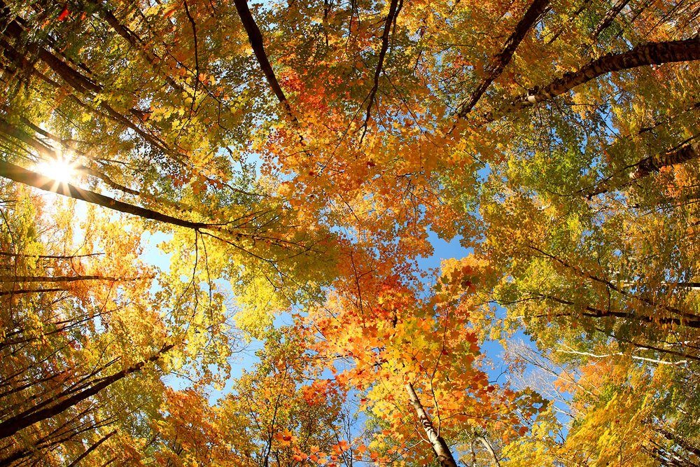 Langlade County Canopy