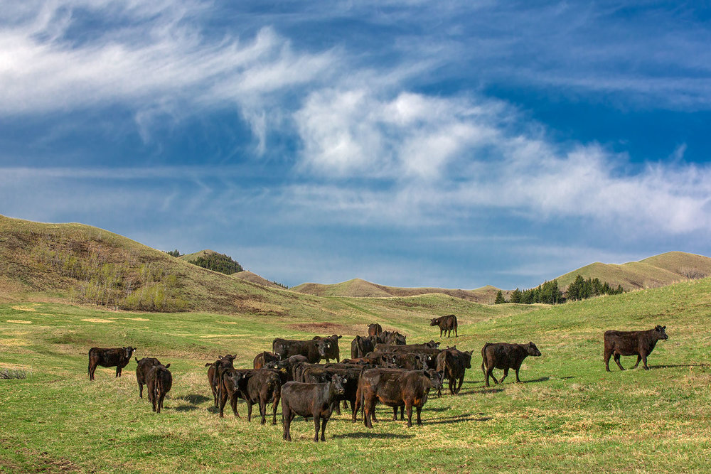 Angus Valley