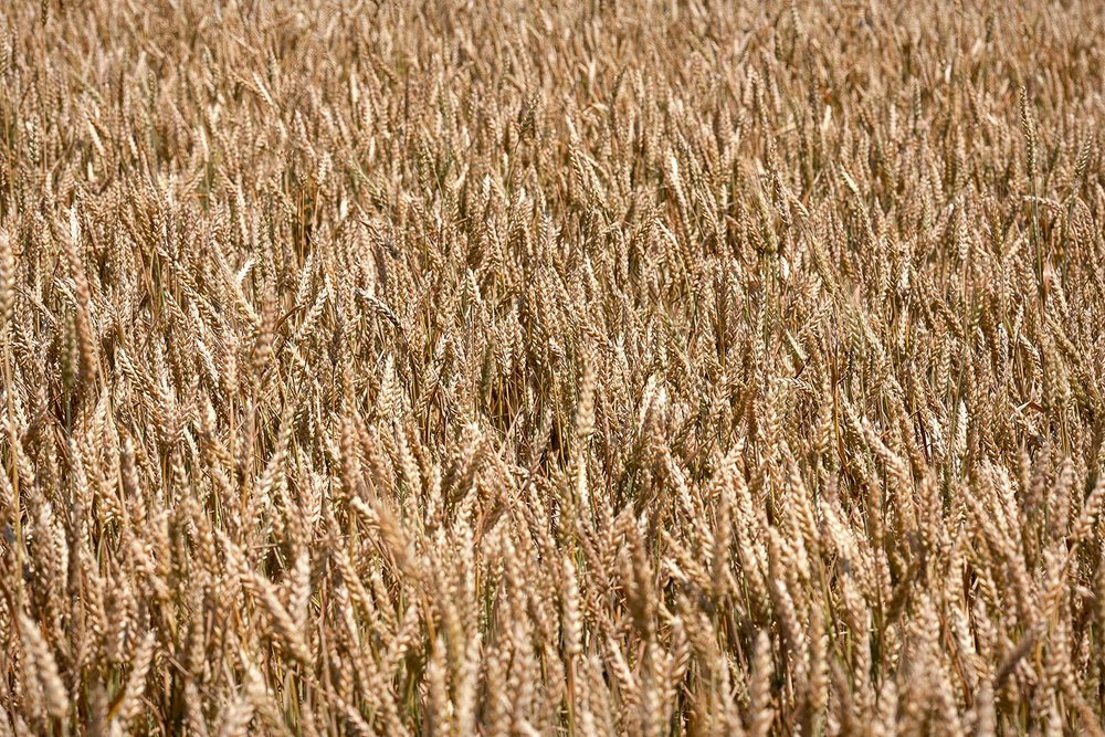 Wonderful Wheat