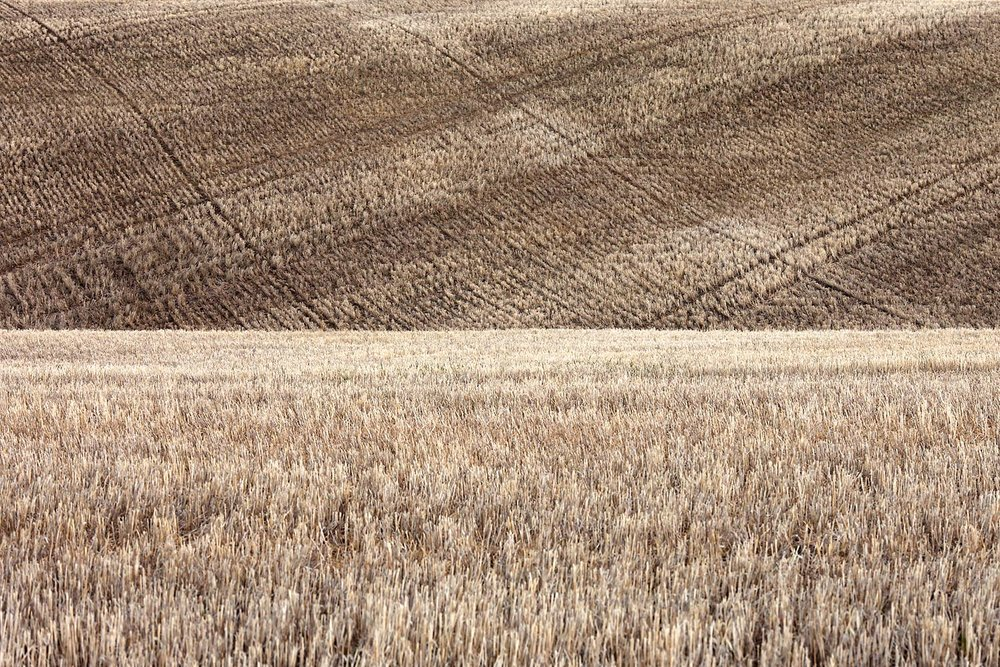 Fallow Crop Rotation Field