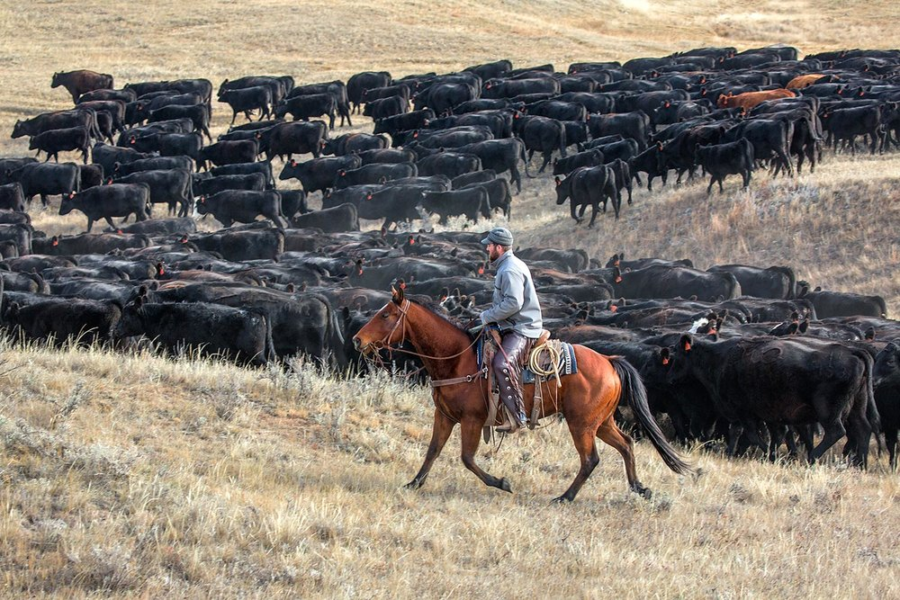 Pushing a Herd of Blacks