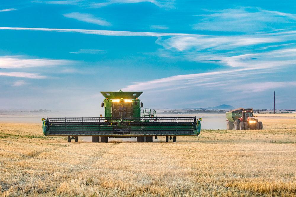 Harvest Dusk
