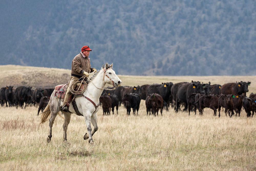 Cowboy on Grey