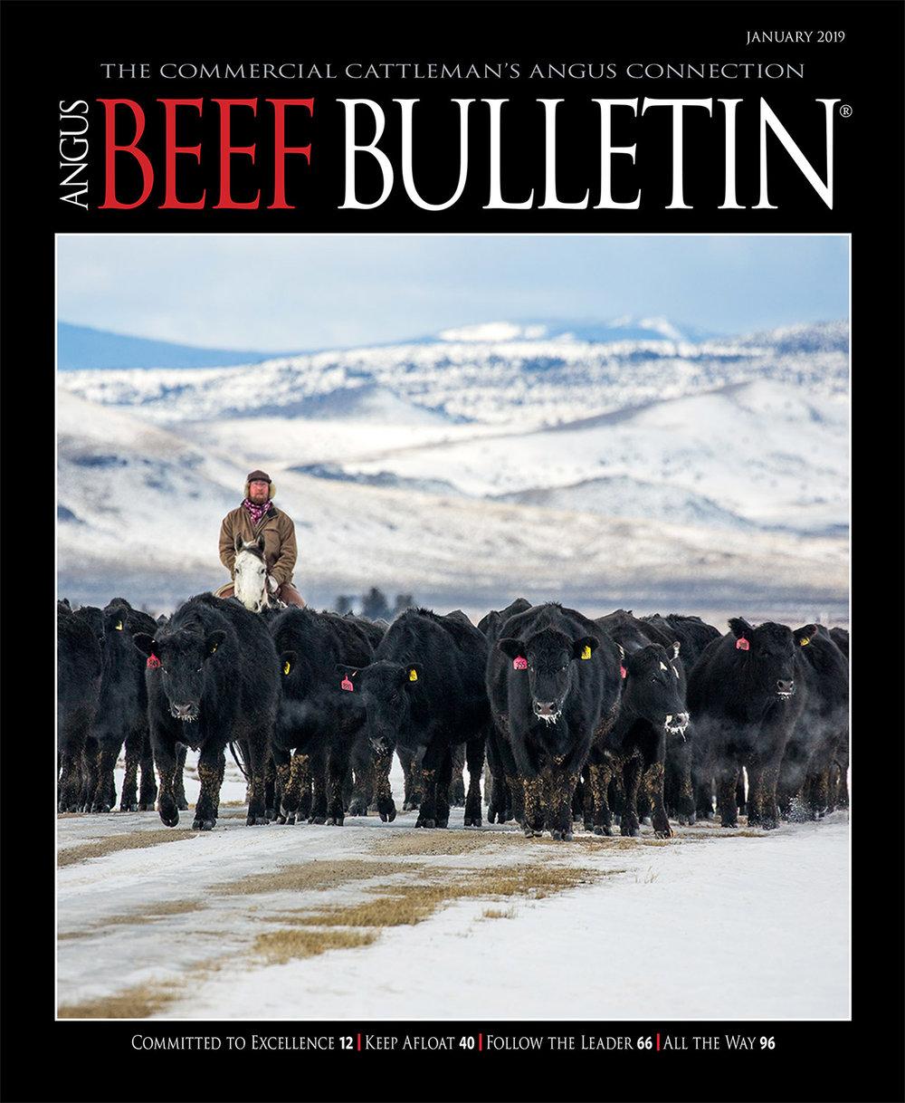 Angus Beef Bulletin