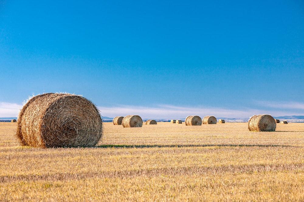 Flat Field of Bales
