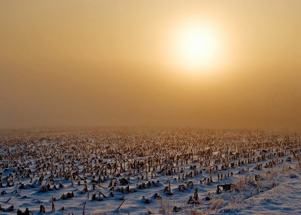 Frozen Field