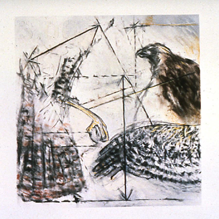 Hawk Processes 1