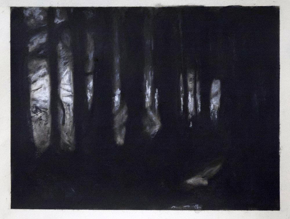 Goleuni Drwy Binwydd 2