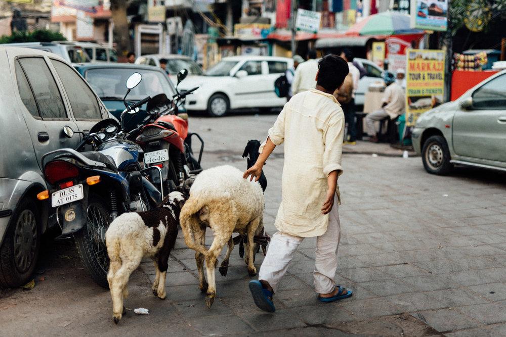indiablog-028.jpg