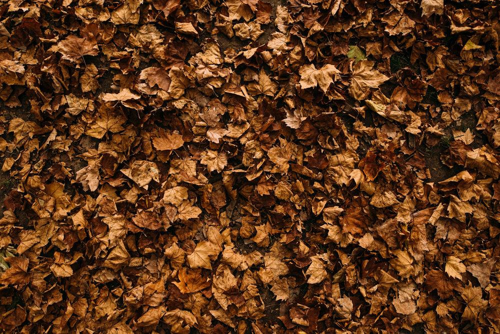 europeblog-022.jpg