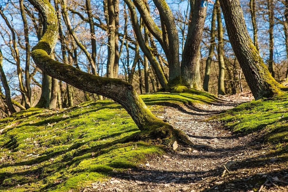 forest-682003_1280.jpg