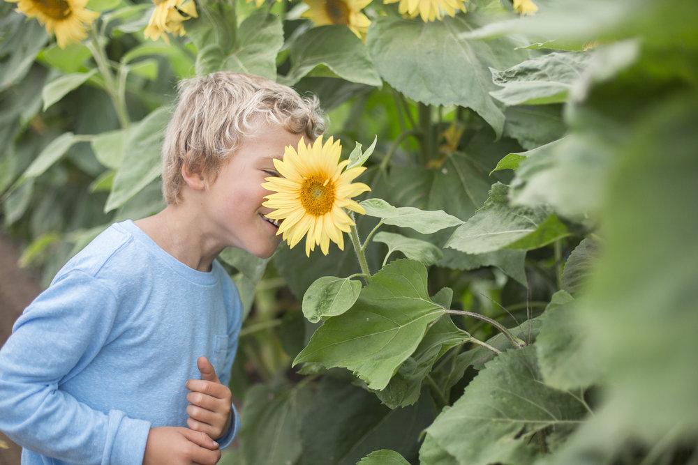 sunflowers20161R0A0032.jpg