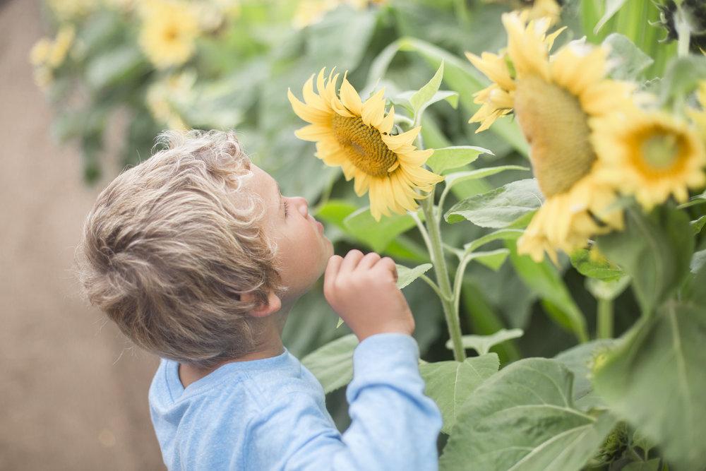 sunflowers20161R0A0038.jpg