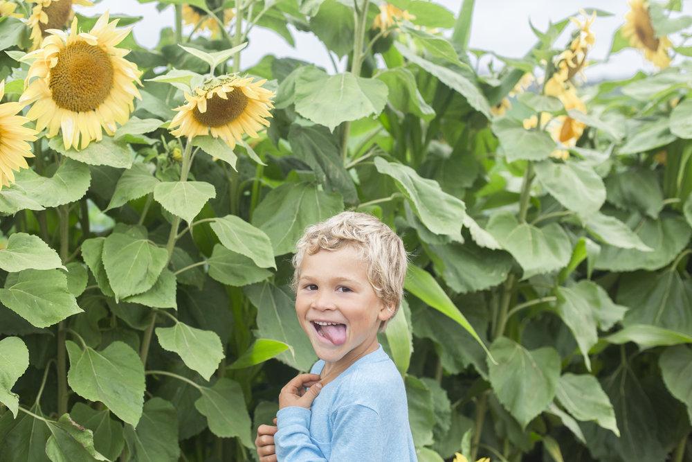 sunflowers20161R0A0165.jpg