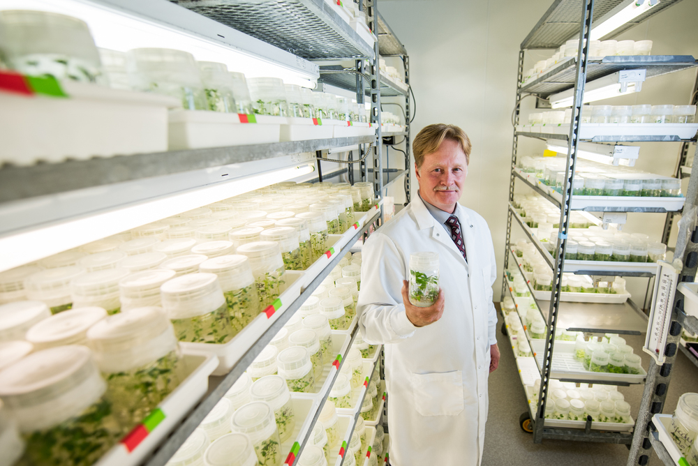 Brent Zettlfounder of CanniMed, holds a marijuana plant in one of their research labs.