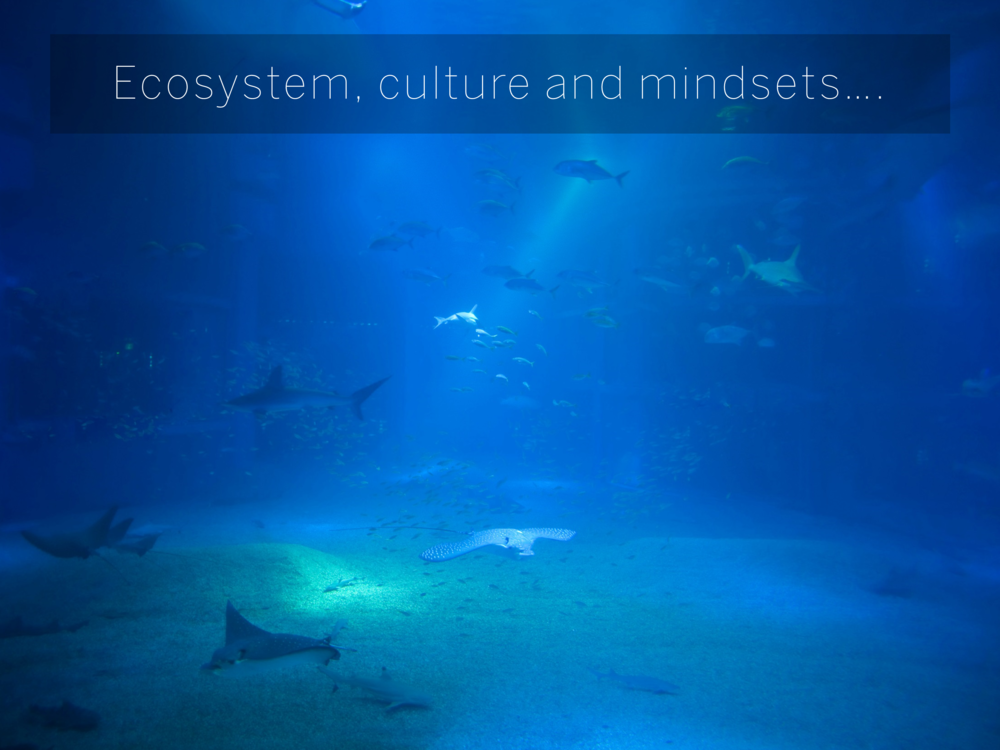 Ecosystem, culture and mindsets….
