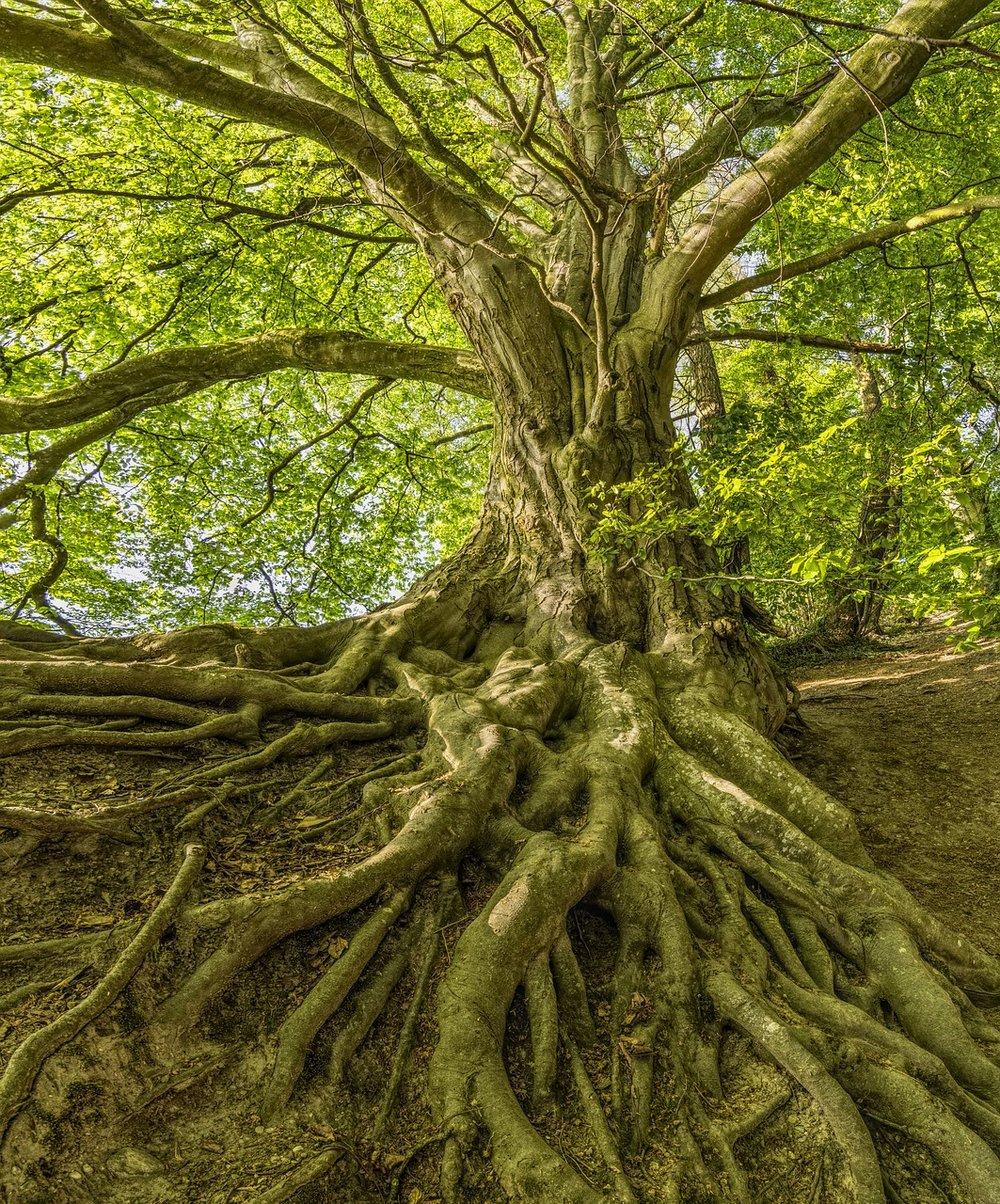 tree-3385957_1280.jpg