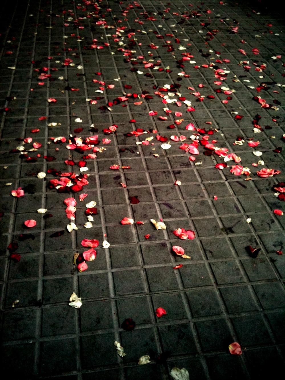 365 Day.344 Petals.JPG