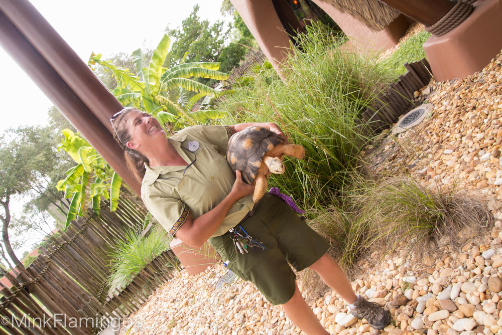 Kim introduces us to a radiated tortoise