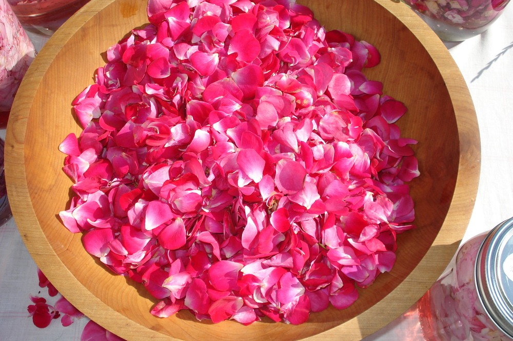 Collected Rose Petals