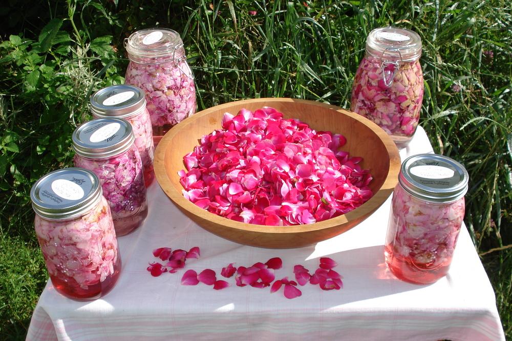 Rose petal elixir