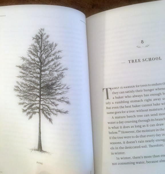 The Hidden Life of Trees by Peter Wohlleben : What they feel, How they communicate