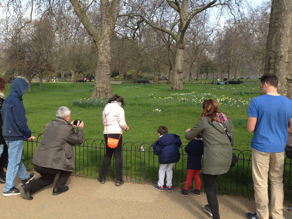 Nature starved Londoners photographing squirrel