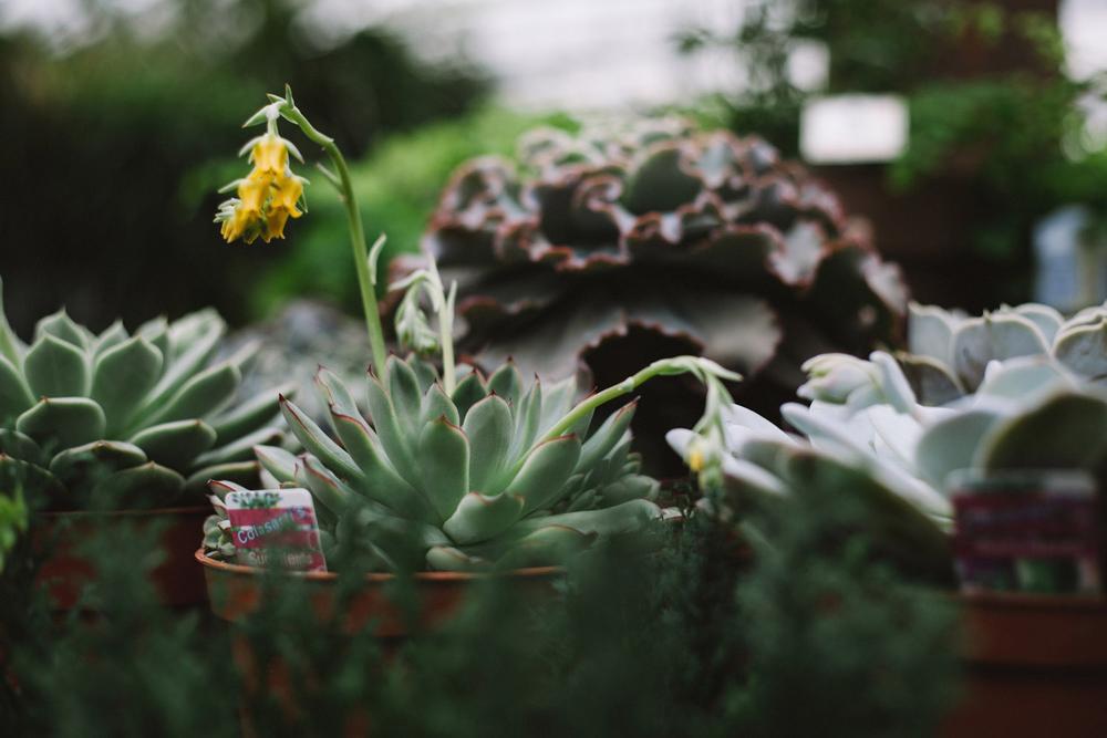 403-FloristAshleyElaine.jpg