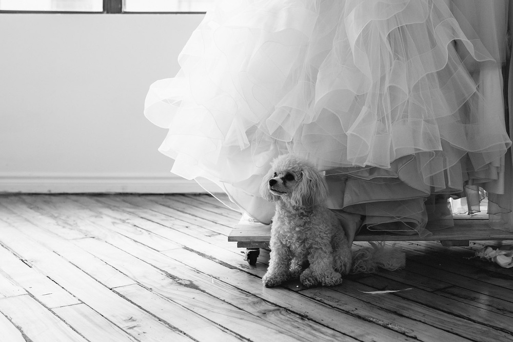 869-dog-in-toronto-wedding-dress-studio.jpg