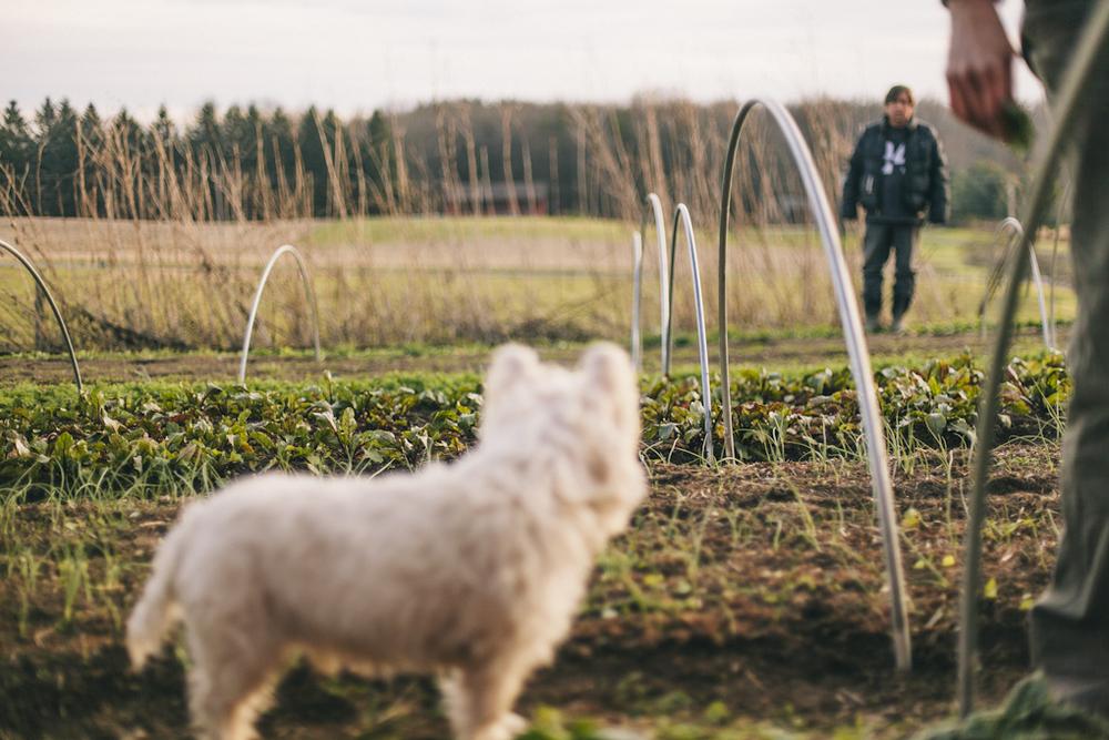 2012_farmblg1_ (13 of 16).jpg