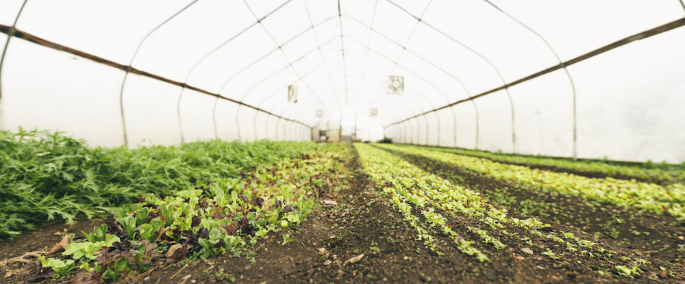 farm_pano_6.jpg