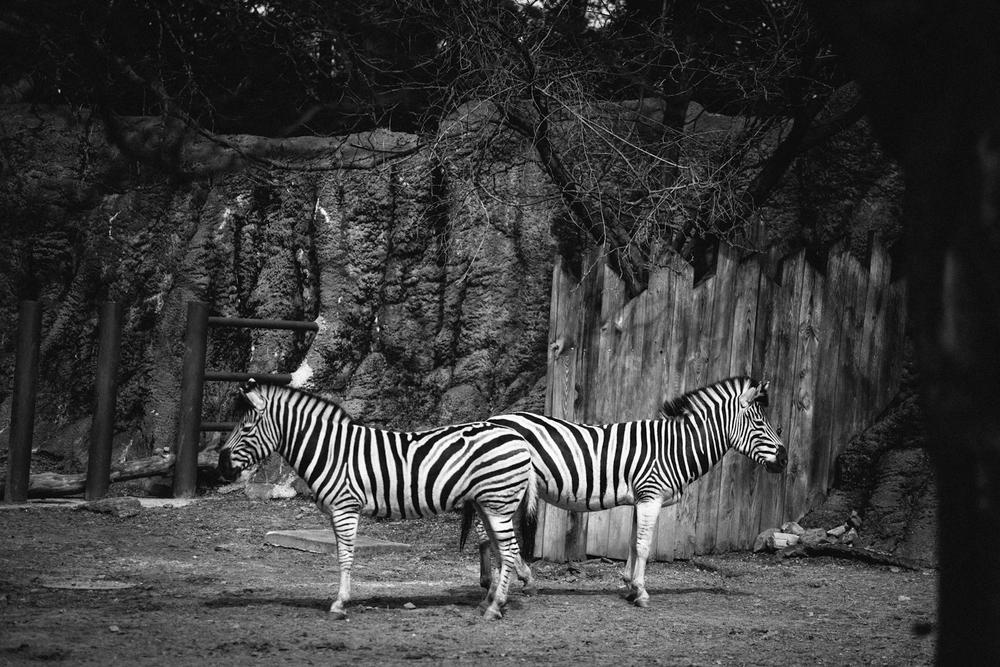 zoo_3.jpg