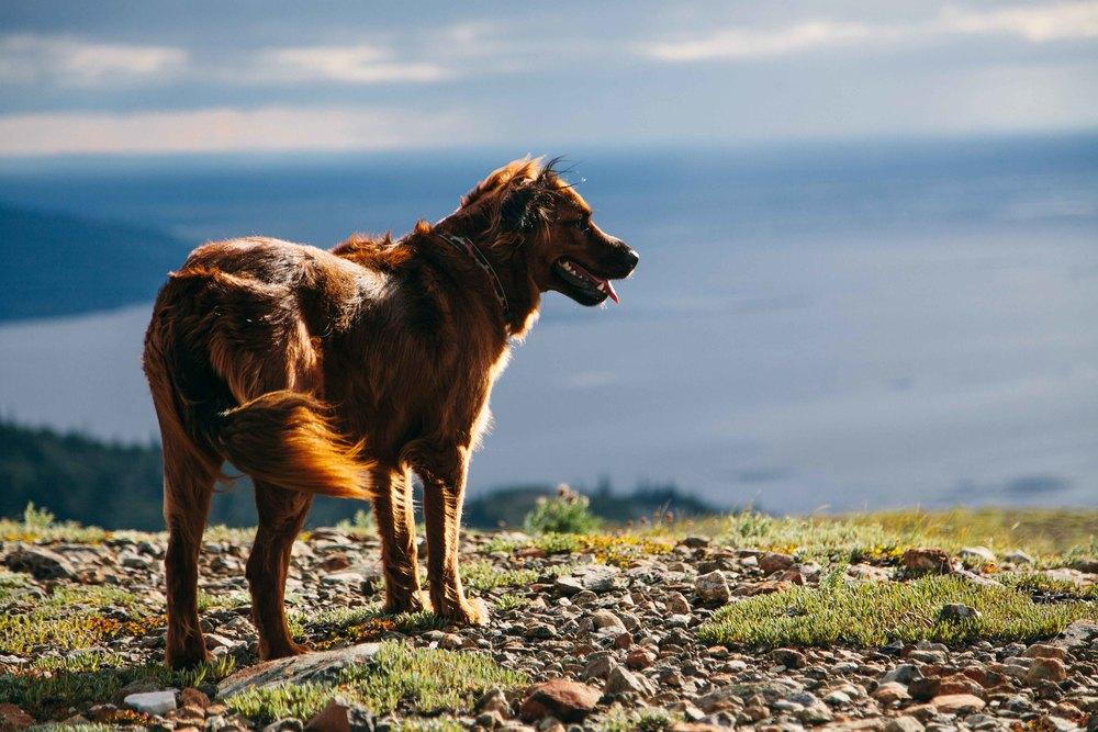 dog_chili-1.jpg