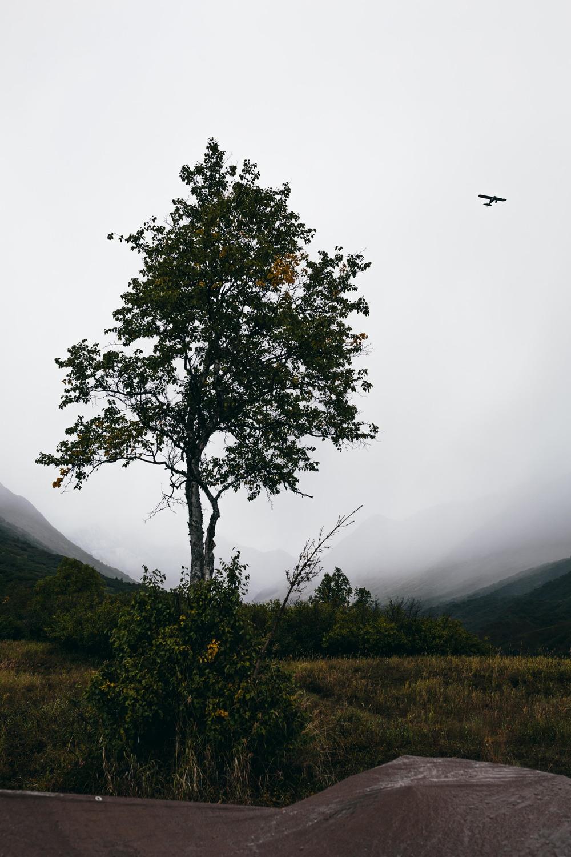 moosehunt_80.jpg
