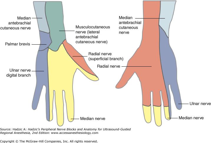 Forearm blocks — Highland EM Ultrasound Fueled pain management