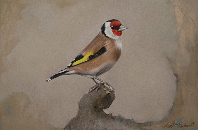'Goldfinch', 8 x 12, Oil on Panel, SMG ID #751